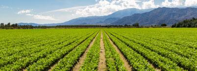 Fortrade – Trading en ligne de devises et de CFD | Agriculture